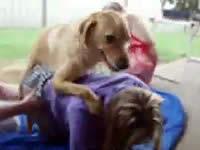 【リンク切れ】【獣姦】人間のおまんこに挿入したくてたまらない犬