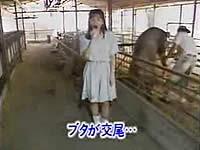 レポート中に豚が交尾するのを見て驚く女子アナ