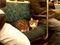 堂々と電車に乗る猫ちゃん