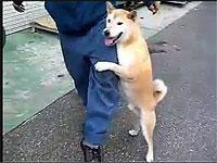 とにかく足が好きな犬さん