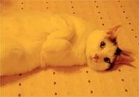 自分の魅力をよく理解している猫