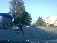 人間と一緒に横断歩道を渡る猫