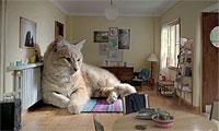 巨大な猫ちゃんと暮らそう