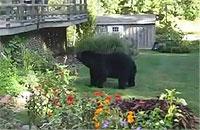 クマ「おじゃまするクマー」おばちゃん「出てけ!!!」