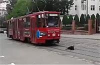 電車の進路妨害をするのろま犬