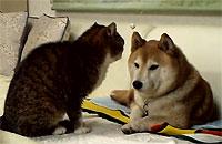 こいつら......動かないぞ!ほとんど動かない犬&猫