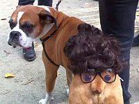 ハロウィンでお尻に顔の仮装をさせられた犬がシュール