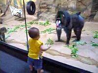 幼児にケツを見せつけるマンドリル