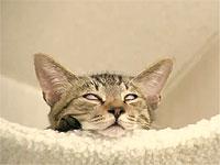 猫の寝顔が怖すぎる