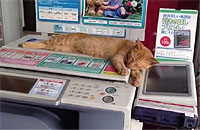コンビニのコピー機を管理してる猫ちゃん
