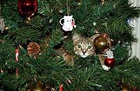 クリスマスツリーといっしょな猫ちゃんの画像集