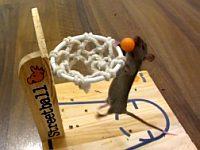 マウスは賢い!様々な芸を披露するネズミたち