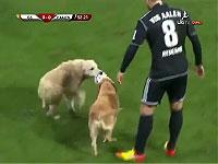 【わんわん乱入】サッカーの試合中に犬が二匹も飛び入り参加するハプニング