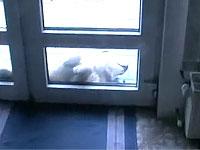 戸の前で変な体勢で寝ちゃう犬