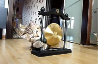 ジャーンジャーン、ドラを鳴らす子猫ちゃん