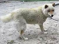 ひつじみたいにモフッとした犬