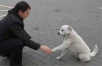 ガソリンスタンドにいる野良犬がとても人懐っこい