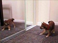 鏡の中の自分と戦う犬や猫の映像集