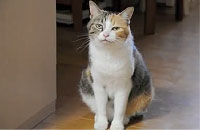 壁に寄りかかろうとした猫が・・・