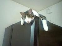 冷蔵庫の番猫
