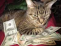 「猫に小判」的な猫画像ばかり集めたサイト