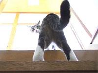 猫をローアングル撮影してみたら