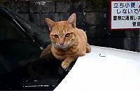 猫「よし、今からすごい事するからよく見とけニャー」→失敗
