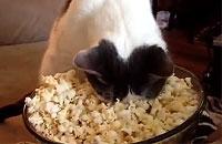 モフンッ...ポップコーンにハマる猫