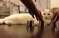 カップの中身をピタリと当てる天才猫