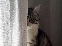じー...っとこちらを見る猫