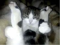 猫のまんぐり返し