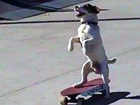 【総集編】スケートボードを楽しむ動物たち