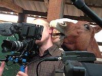 カメラマンにイタズラしまくる馬が可愛い