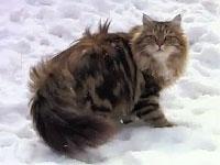 モフモフ猫の雪遊び