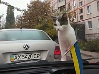 車のワイパーに興味津々な猫。そして...。