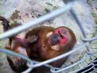 猿 「バナナをくれたお礼に良いモノ見せてあげるよ!」