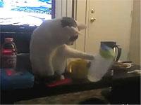 物を次々と払いのけて落としまくる猫コンピレーション