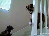 猫が怖くてご主人様の元へ行けない犬たち