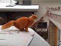 【猫】雪が積もった車からガレージへ華麗にジャンプにゃ!