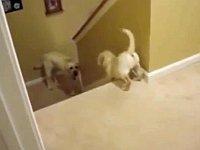 【犬・猫】子供に階段の降り方を教える犬と猫の比較