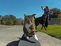 スケートボードを華麗に乗りこなす猫