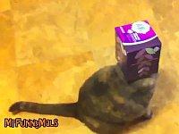 小さな箱に顔を突っ込んで抜けなくなった猫たち
