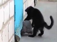 外に出れない犬の脱出を手伝う猫