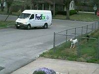 車が大好きな犬が見た悲劇