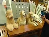 人間より行儀が良いかもしれない犬たち