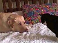 どうしても猫と仲良くなりたい犬たち