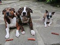 3匹の犬の前にソーセージを置き「待て」→「よし」をやってみた