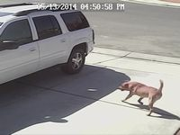 幼児に襲いかかる猛犬を果敢に撃退した飼い猫