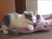スリッパと戦う猫たちが可愛い