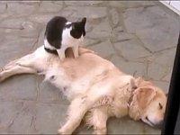 犬をマッサージするのが好きな猫たちが可愛い総集編